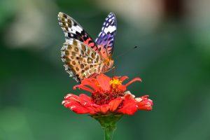 061花とチョウ1